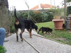Darwin et Aïda dans le jardin