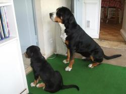 Darwin et Aïda attendent leur gamelle