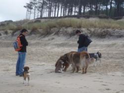 Des amis et des chiens