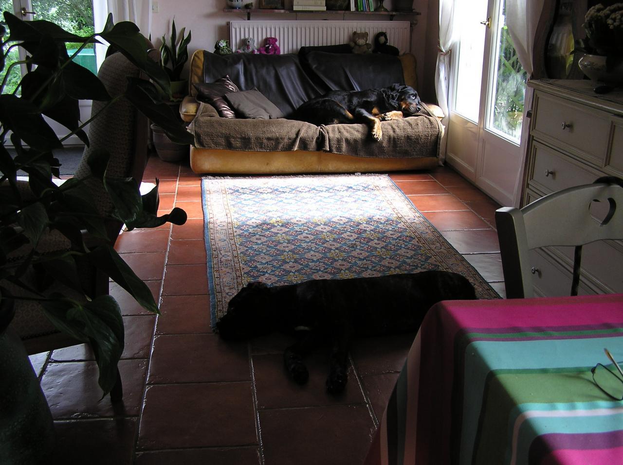 l ments de la culture canine. Black Bedroom Furniture Sets. Home Design Ideas